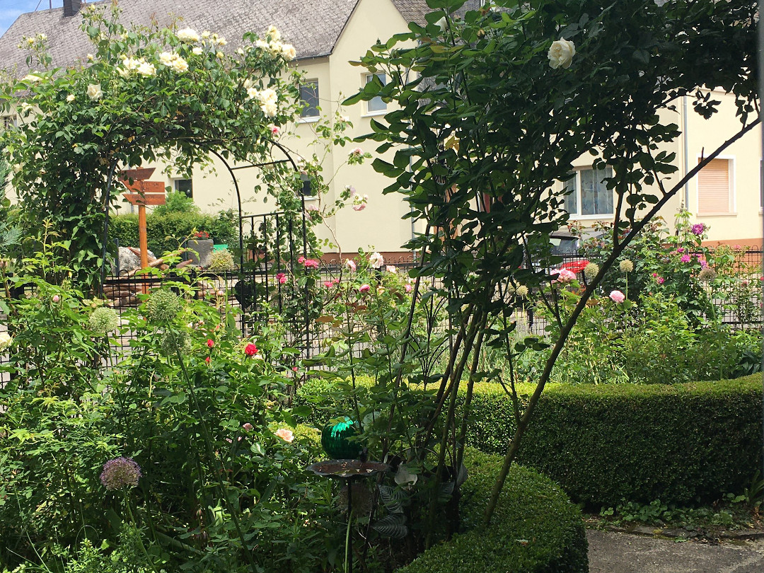 Arbor covered with climbing roses'Ilse Krohn'