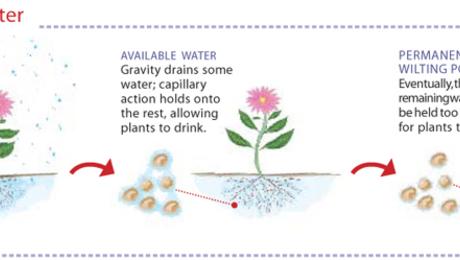 Improving Clay Soils - FineGardening