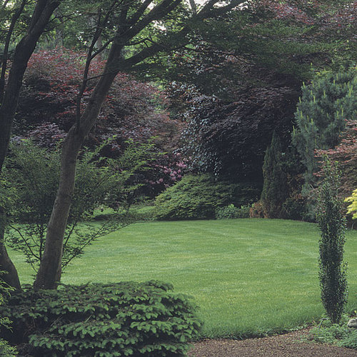 Borders Around Trees: A Bold Border Of Trees And Shrubs