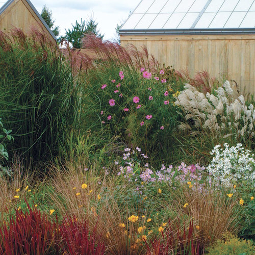 Ornamental Grass Garden Plan Designing with grasses finegardening workwithnaturefo
