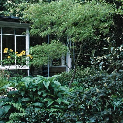 Common Plants Great Cultivars Finegardening