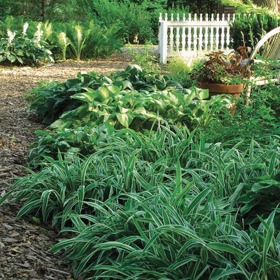 Sedges - FineGardening on perennial herb garden zone 6, perennial vines zone 6, perennial grasses shade zone 6,
