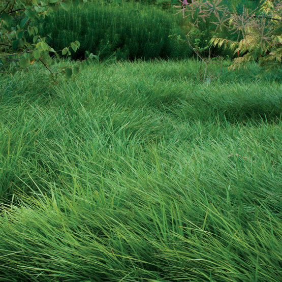 Low-Maintenance Alternatives to Lawns - FineGardening
