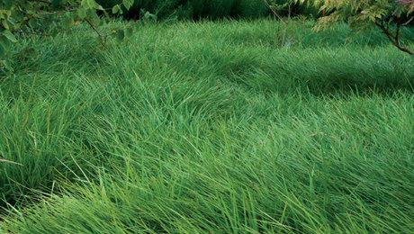 Low-Maintenance Alternatives to Lawns