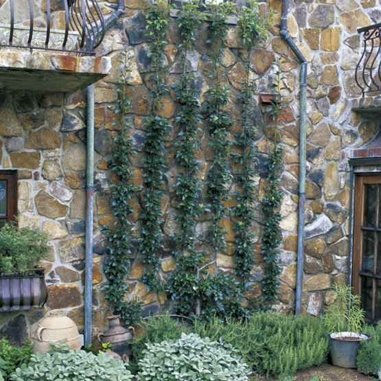 Espalier Finegardening