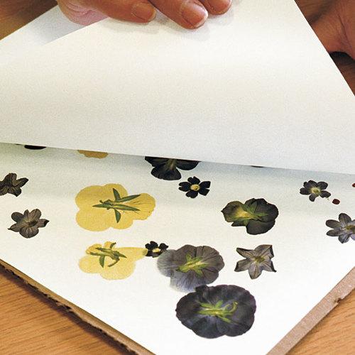 Pressing Flowers Finegardening