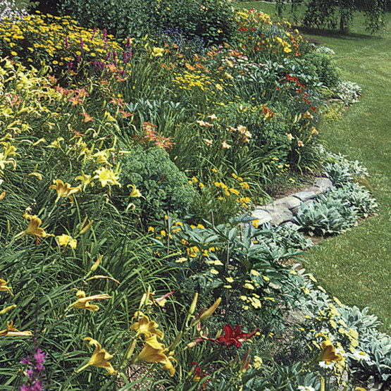 Design A Border With Strong Plant Shapes Finegardening