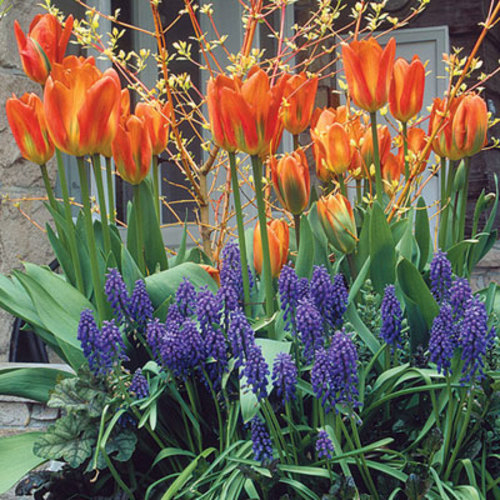 Planting Spring Bulbs In Containers