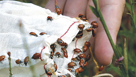 Ants Aren't Your Enemy - FineGardening