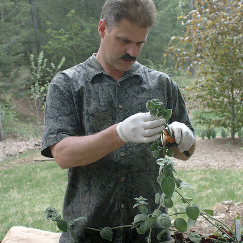 Save Money And Grow More Plants With Tip Cuttings Finegardening