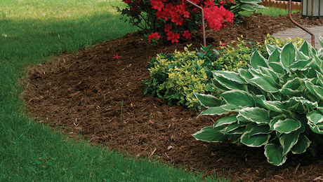 Improve Your Soil by Raking Less - FineGardening