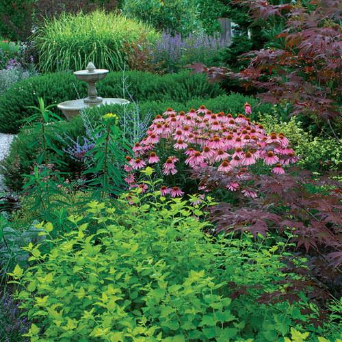 airy plants