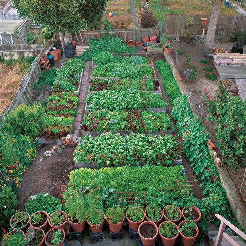 A Mini Farm In San Francisco Finegardening