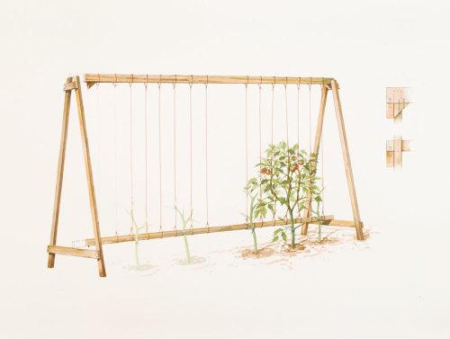 Build An A Frame Tomato Trellis Finegardening