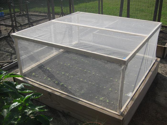 Raised Bed Pest Cover Finegardening