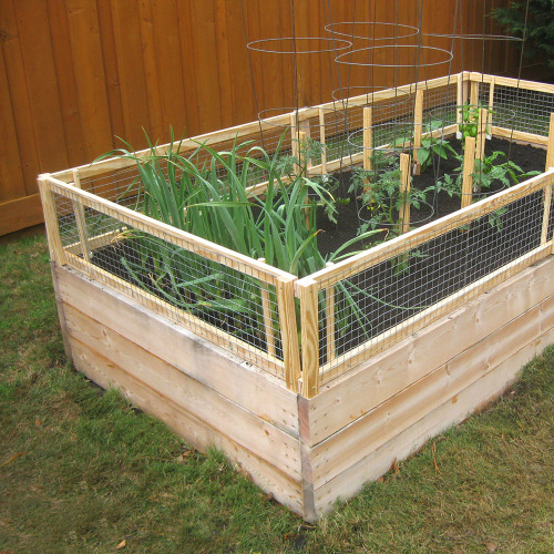Diy Raised Bed Removable Pest Gate Finegardening