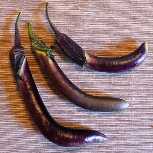 How To Grow Eggplant In A Container