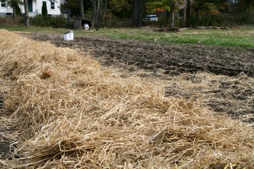 7 Organic Mulches For The Vegetable Garden Finegardening
