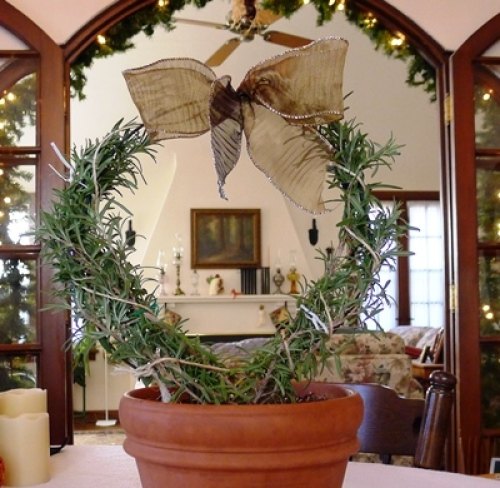 How To Grow An Indoor Rosemary Topiary Finegardening