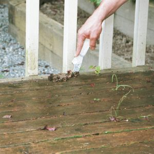 3. Don't allow debris to accumulate between deck boards.