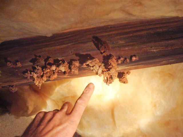 A Moldy Crawlspace Nightmare Fine Homebuilding