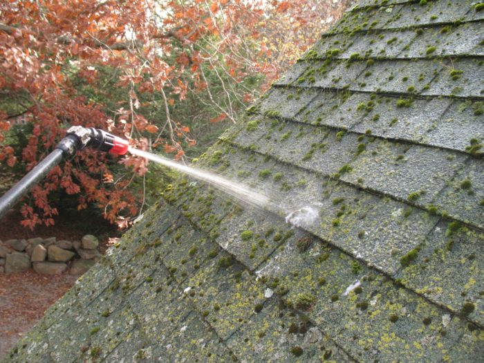 How To Remove Lichen From Asphalt Roof Shingles 12 300