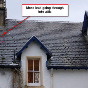 Moss Problem Which Is Better Zinc Or Copper Fine