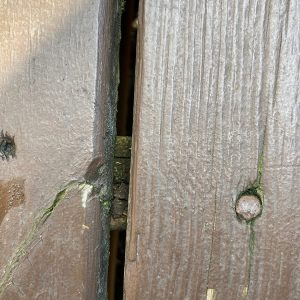 tops-of-the-joists rotted