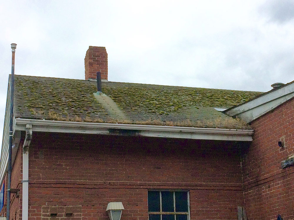 Dave-roof-moss-2