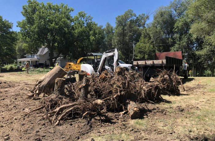 Tree and stump removal