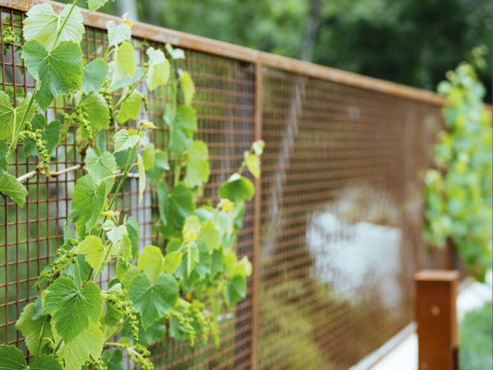 A brown metal fence with green vines growing along it