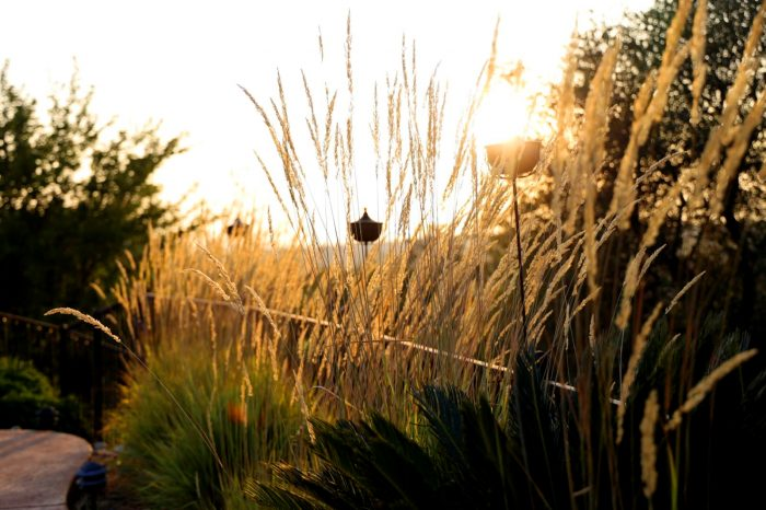 Reeds and grasses set against a golden setting sun