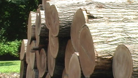 From Log to Lumber; how a tree becomes boards