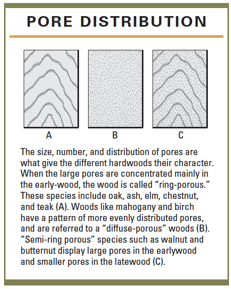 pore distribution in wood