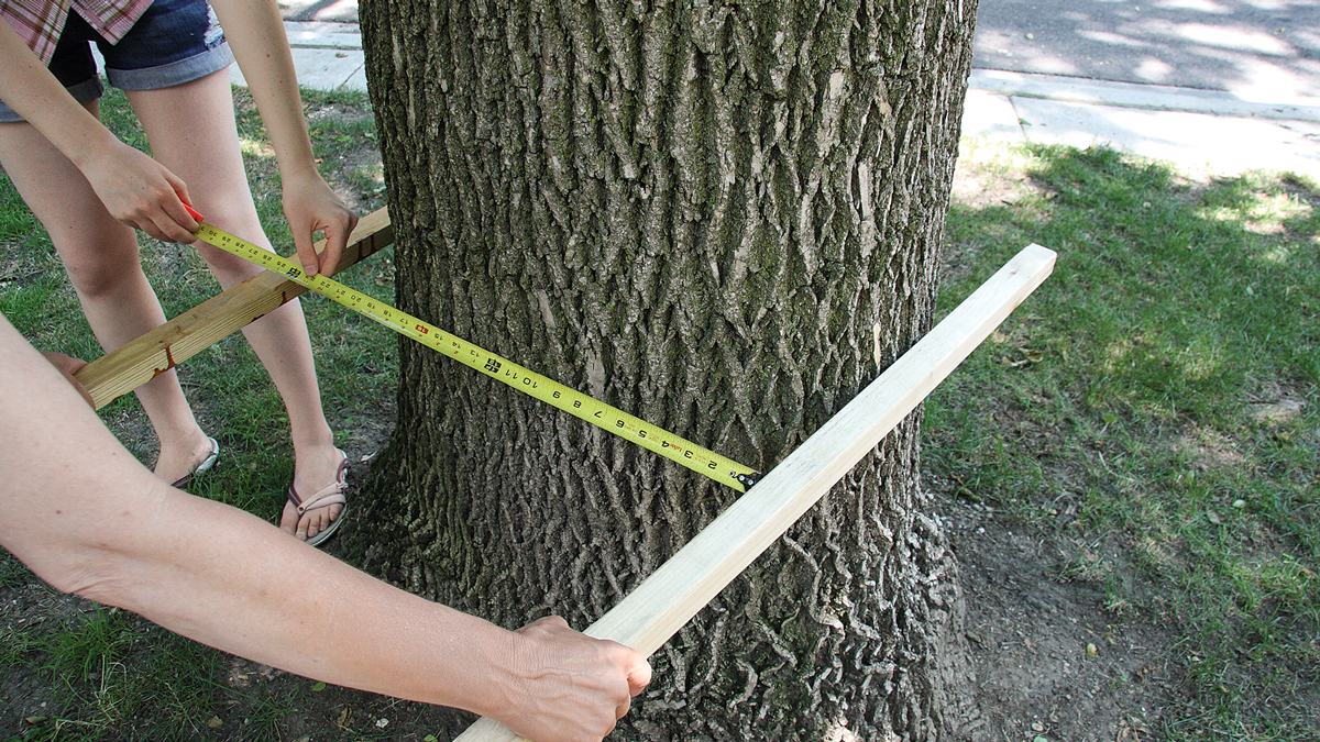 Measure the diameter of the tree at its widest point at 17 in. above the ground.