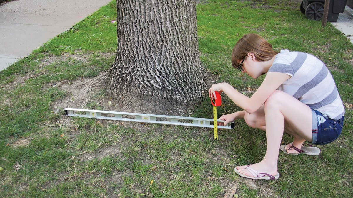 Use a level and a tape measure to measure the ground's slope around your tree.
