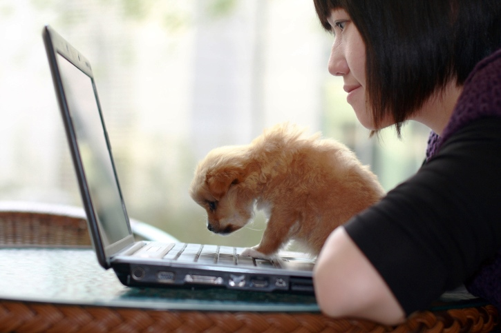 10 Work From Home Jobs For Dog Lovers Flexjobs