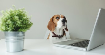 How a Virtual Office Celebrates Take Your Dog to Work Day
