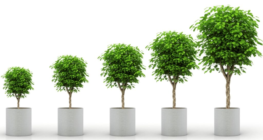 Learning how to grow a network like growing trees