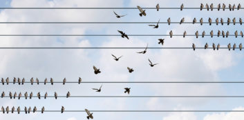 Birds on a wire, symbolizing temp and contract jobs.