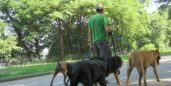 Walking dogs, one way to earn more money.