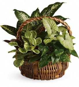 Emerald Garden Basket Funeral Plants