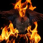 Nickbradshaw's Fire Geese Logo