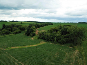 TBD24 County 117, Wykoff, MN 55990