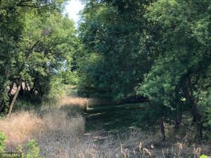 Seasonal creek is beautiful wildlife space.