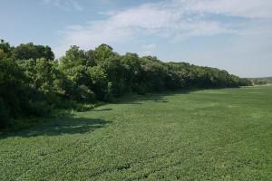 TBD Lost Loop Road, Chatfield, MN 55923