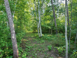 Trail Cut From Blacktop Road to Lakeshore