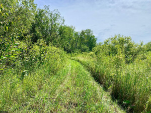 TBD County Road 6 NW, Baudette, MN 56623