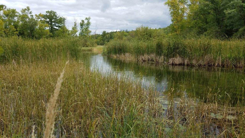 TBD Forest Drive, Park Rapids, MN 56470