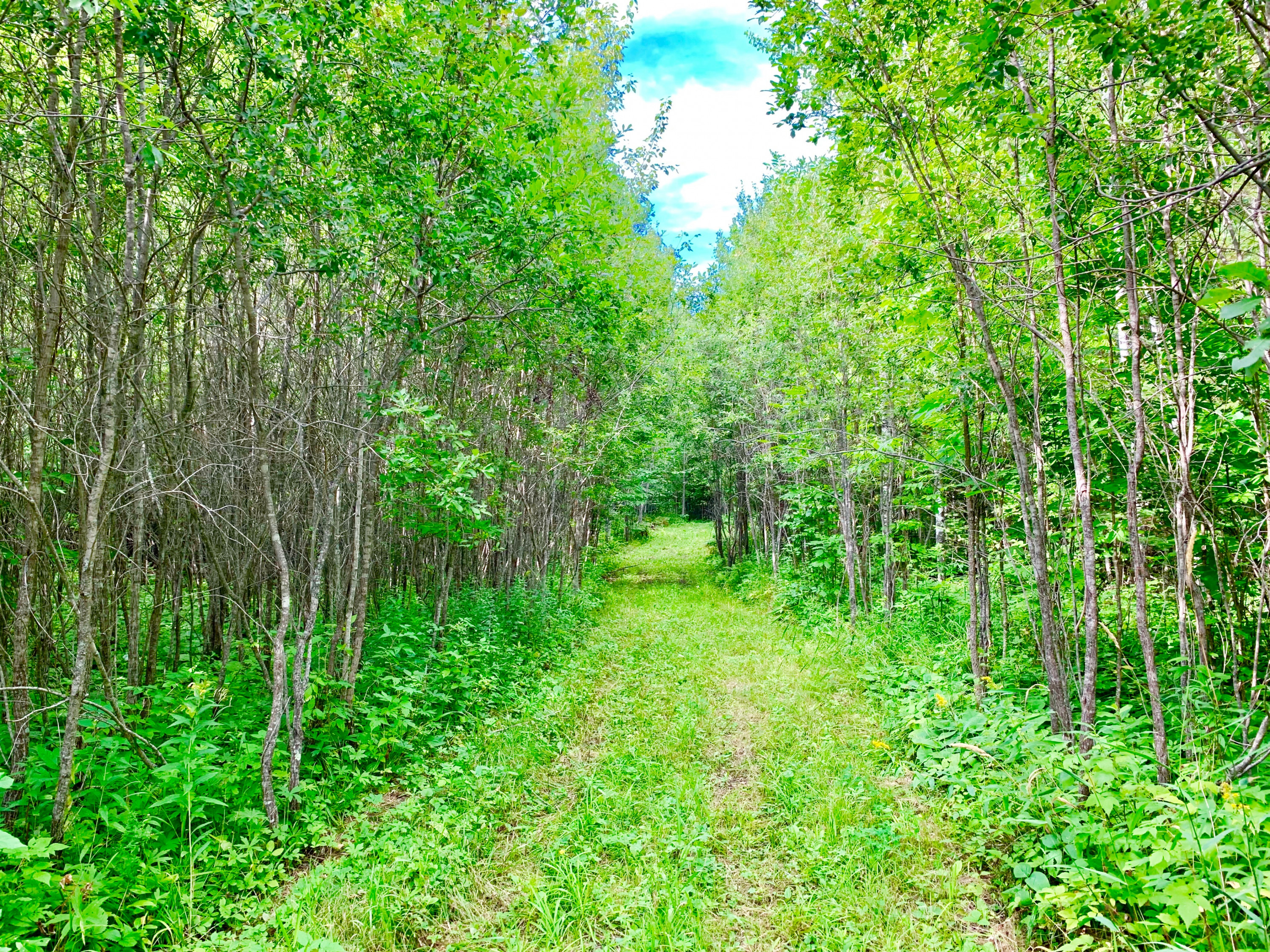Tract C UT Road 140, Birchdale, MN 56629